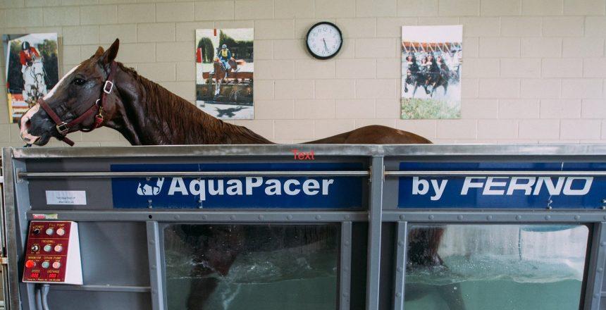Horse Rehab on AquaPacer
