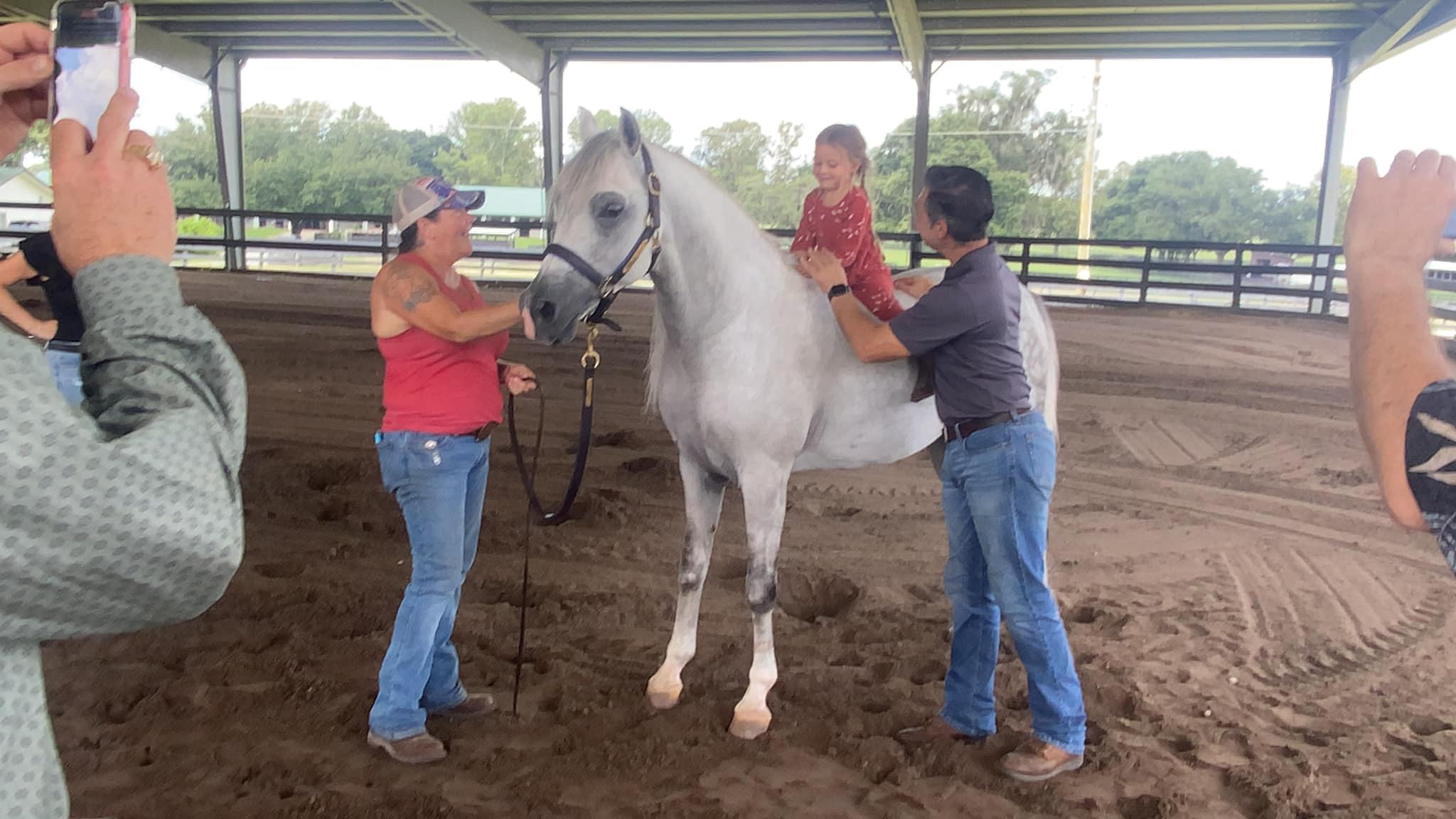 Ideal horses for children